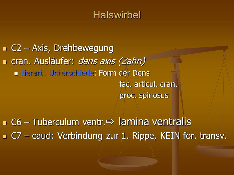 Halswirbel C2 – Axis, Drehbewegung cran. Ausläufer: dens axis (Zahn)