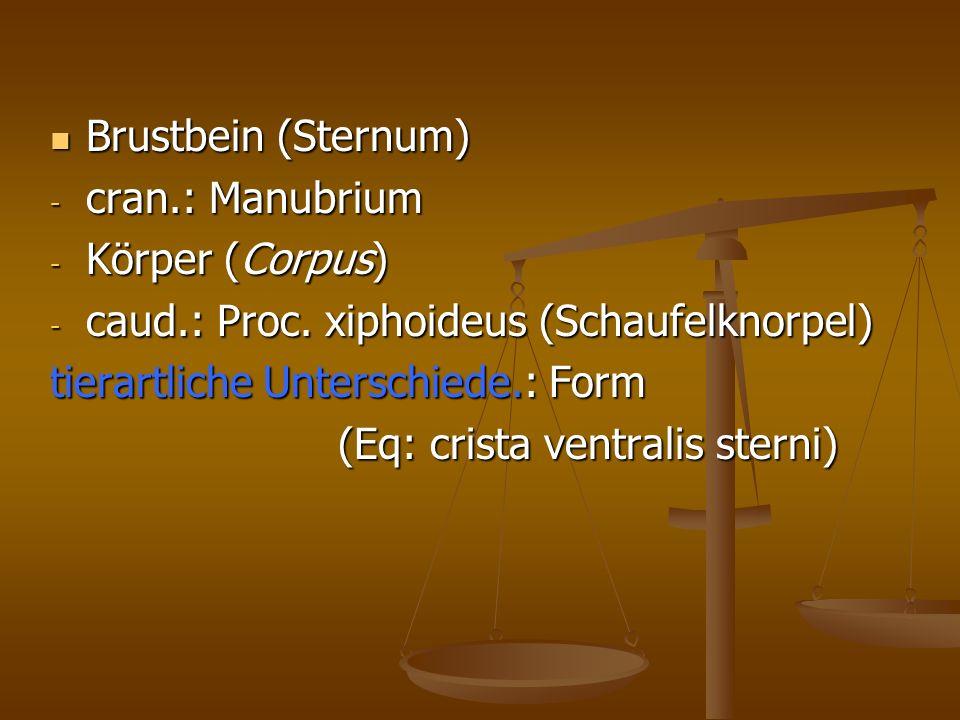 Brustbein (Sternum) cran.: Manubrium. Körper (Corpus) caud.: Proc. xiphoideus (Schaufelknorpel) tierartliche Unterschiede.: Form.