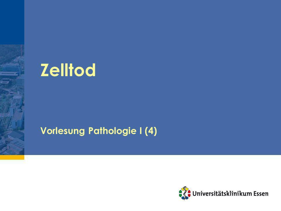 Zelltod Vorlesung Pathologie I (4)