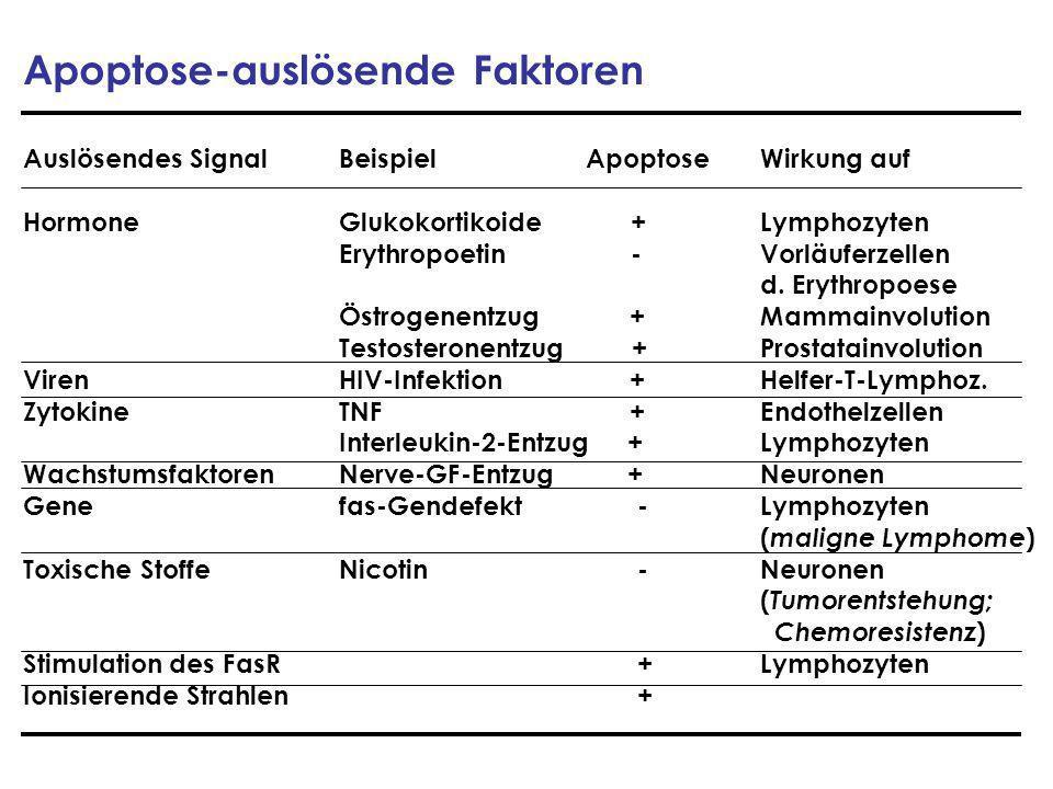 Apoptose-auslösende Faktoren