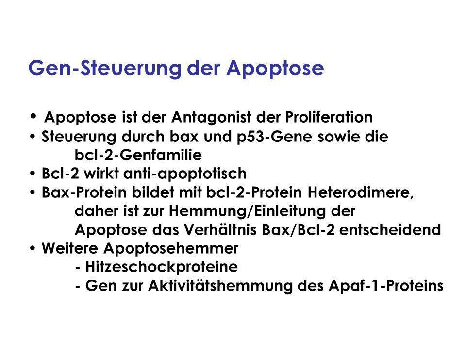 Gen-Steuerung der Apoptose