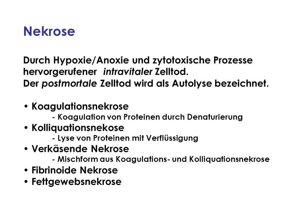Nekrose Durch Hypoxie/Anoxie und zytotoxische Prozesse