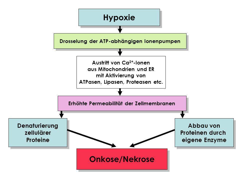 Hypoxie Onkose/Nekrose