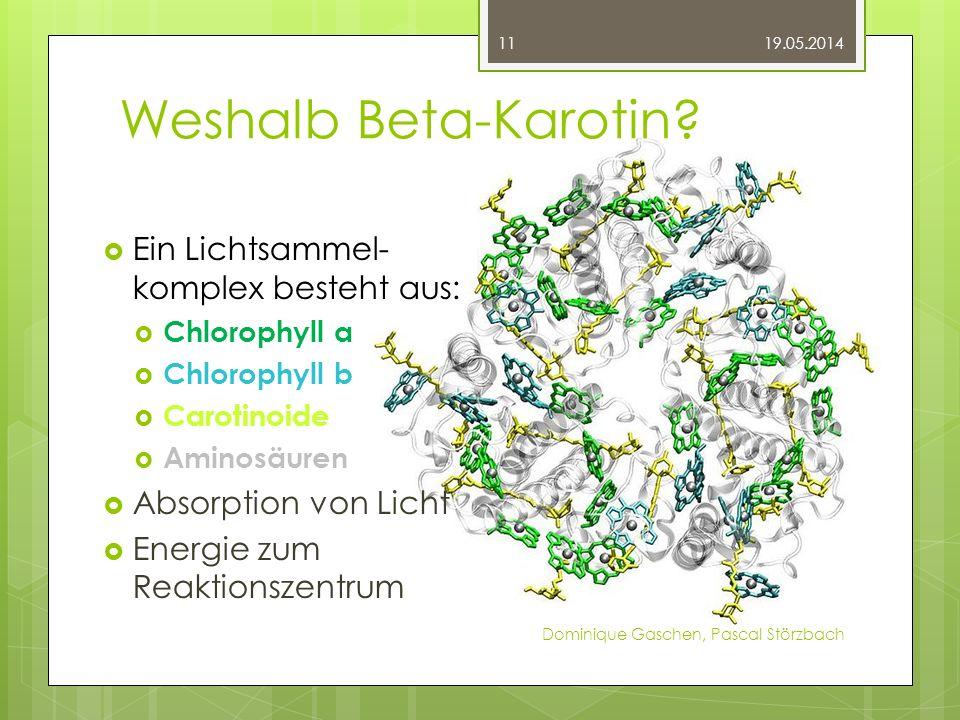Weshalb Beta-Karotin Ein Lichtsammel- komplex besteht aus: