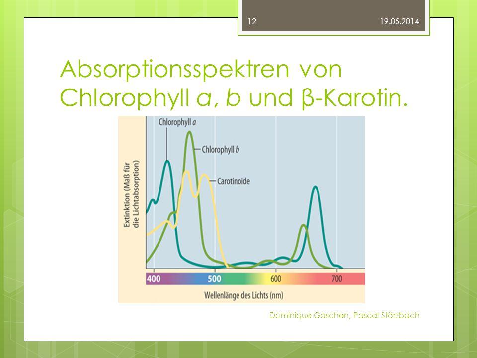 Absorptionsspektren von Chlorophyll a, b und β-Karotin.