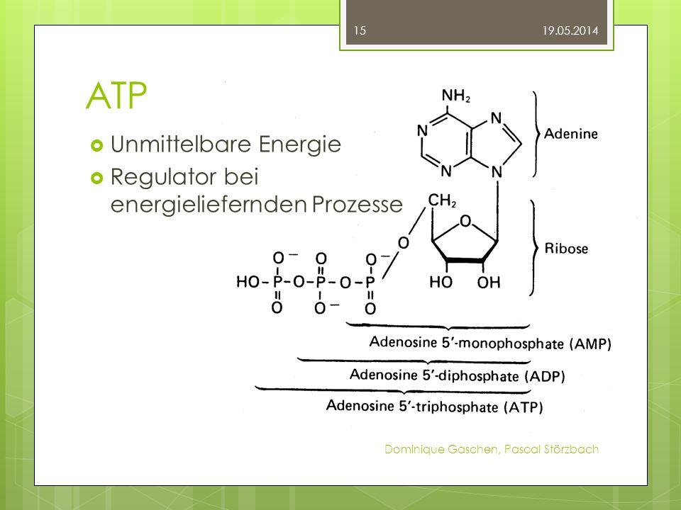 ATP Unmittelbare Energie Regulator bei energieliefernden Prozesse