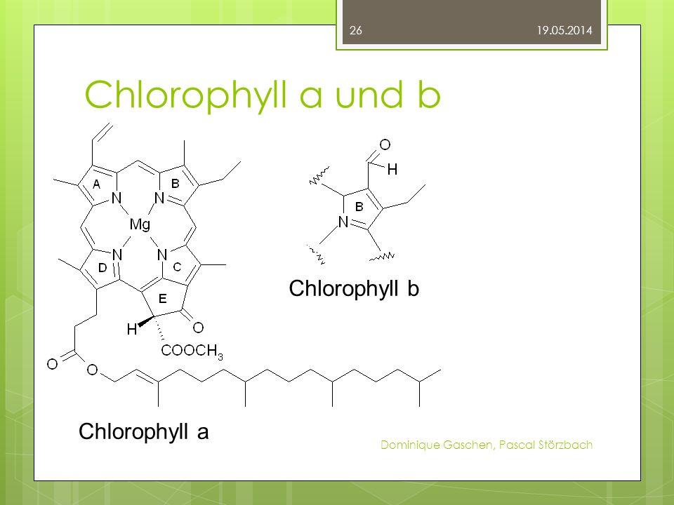 Chlorophyll a und b Chlorophyll a Chlorophyll b Chlorophyll a