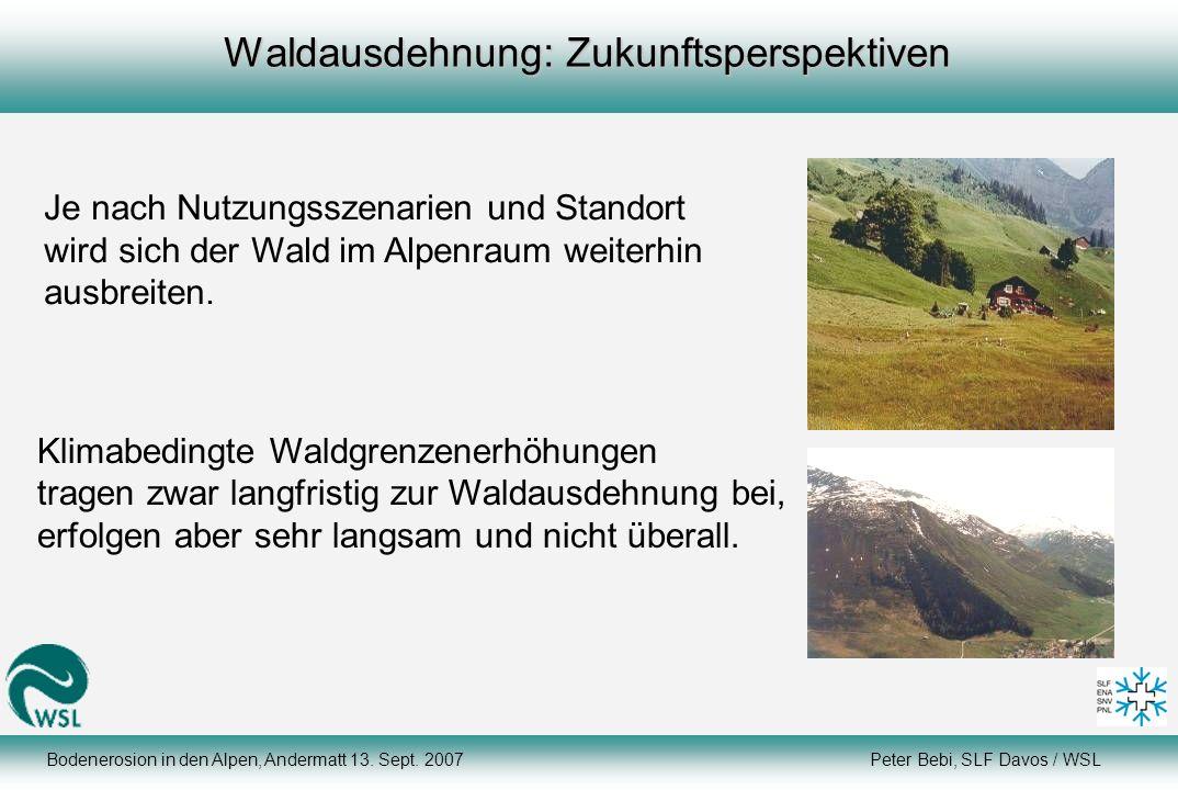 Waldausdehnung: Zukunftsperspektiven