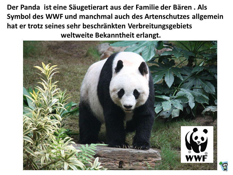 Der Panda ist eine Säugetierart aus der Familie der Bären