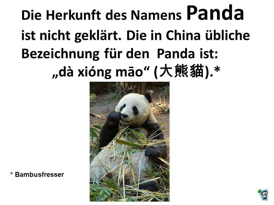 Die Herkunft des Namens Panda ist nicht geklärt
