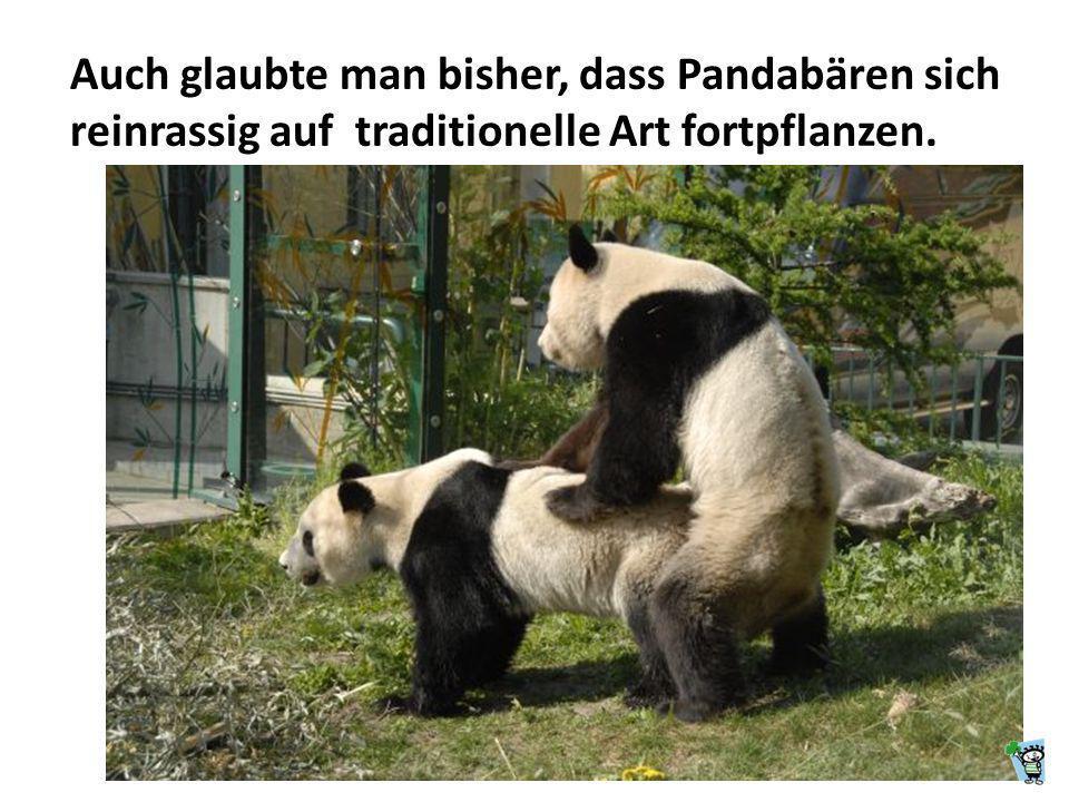 Auch glaubte man bisher, dass Pandabären sich reinrassig auf traditionelle Art fortpflanzen.
