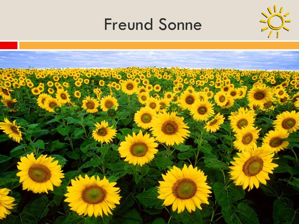 Freund Sonne