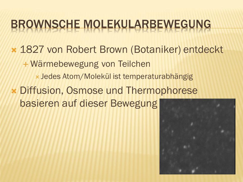 Brownsche Molekularbewegung
