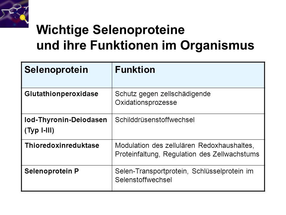 Wichtige Selenoproteine und ihre Funktionen im Organismus