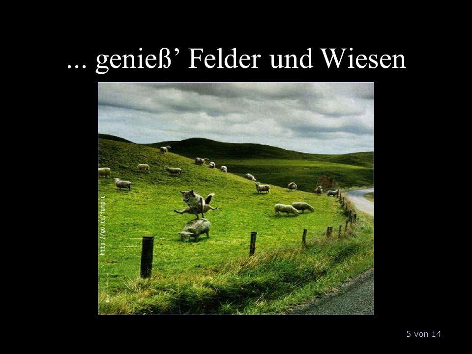 ... genieß' Felder und Wiesen