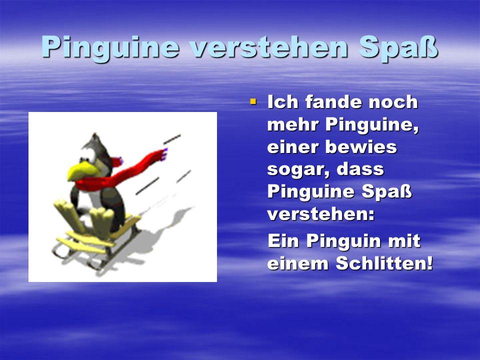 Pinguine verstehen Spaß