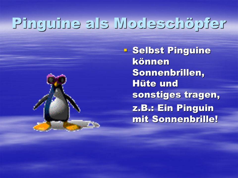 Pinguine als Modeschöpfer