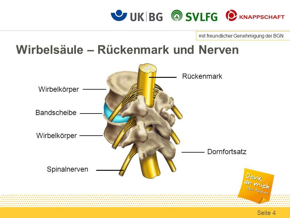Wirbelsäule – Rückenmark und Nerven