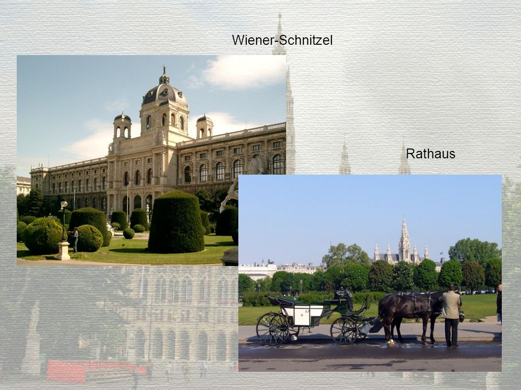 Wiener-Schnitzel Rathaus