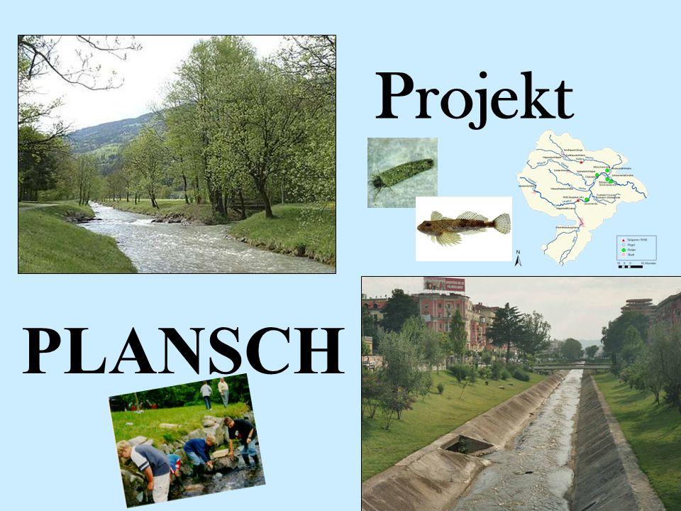 Projekt PLANSCH