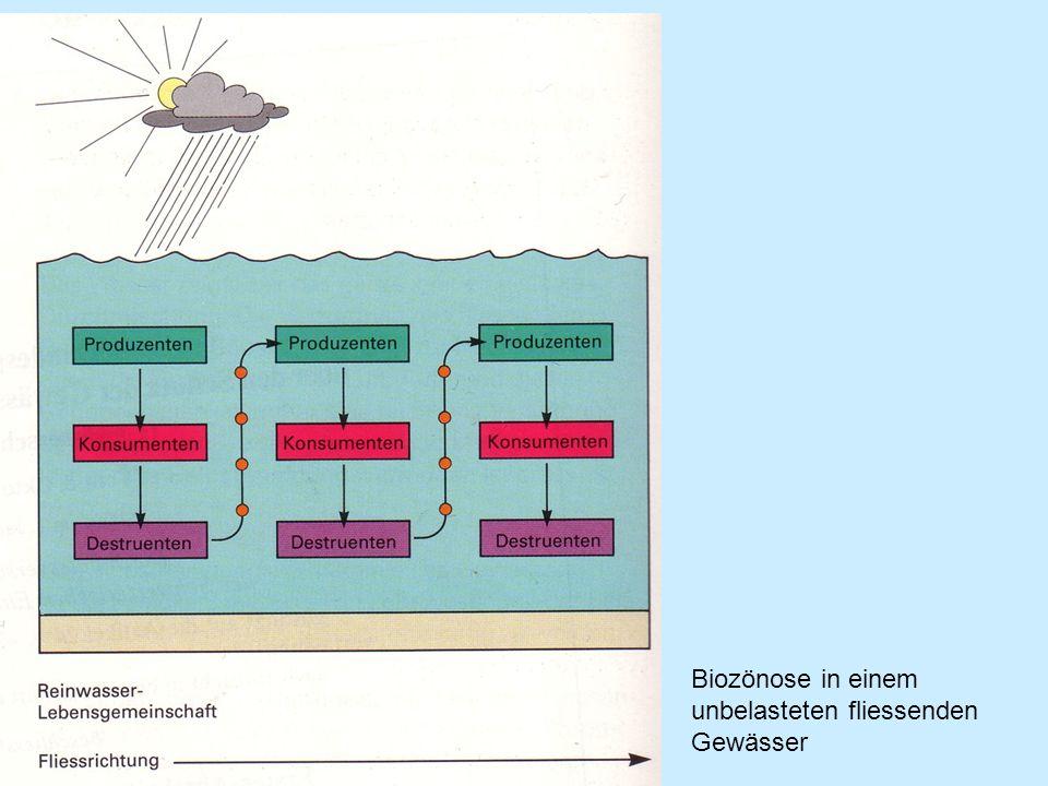Biozönose in einem unbelasteten fliessenden Gewässer