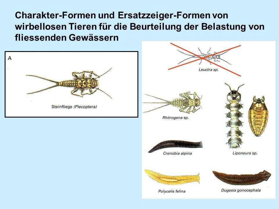 Charakter-Formen und Ersatzzeiger-Formen von wirbellosen Tieren für die Beurteilung der Belastung von fliessenden Gewässern