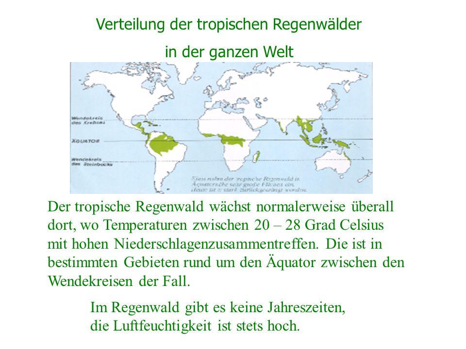 Verteilung der tropischen Regenwälder