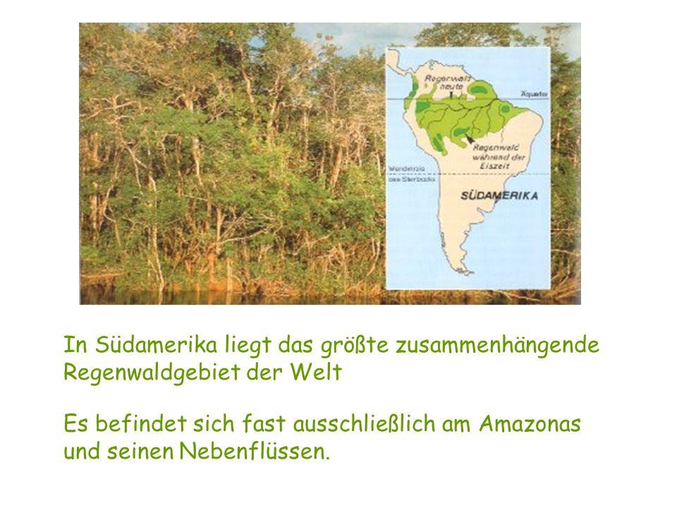 In Südamerika liegt das größte zusammenhängende Regenwaldgebiet der Welt