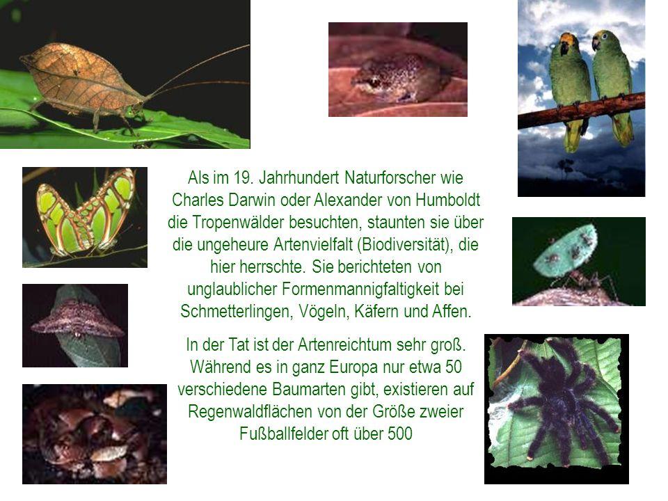 Als im 19. Jahrhundert Naturforscher wie Charles Darwin oder Alexander von Humboldt die Tropenwälder besuchten, staunten sie über die ungeheure Artenvielfalt (Biodiversität), die hier herrschte. Sie berichteten von unglaublicher Formenmannigfaltigkeit bei Schmetterlingen, Vögeln, Käfern und Affen.