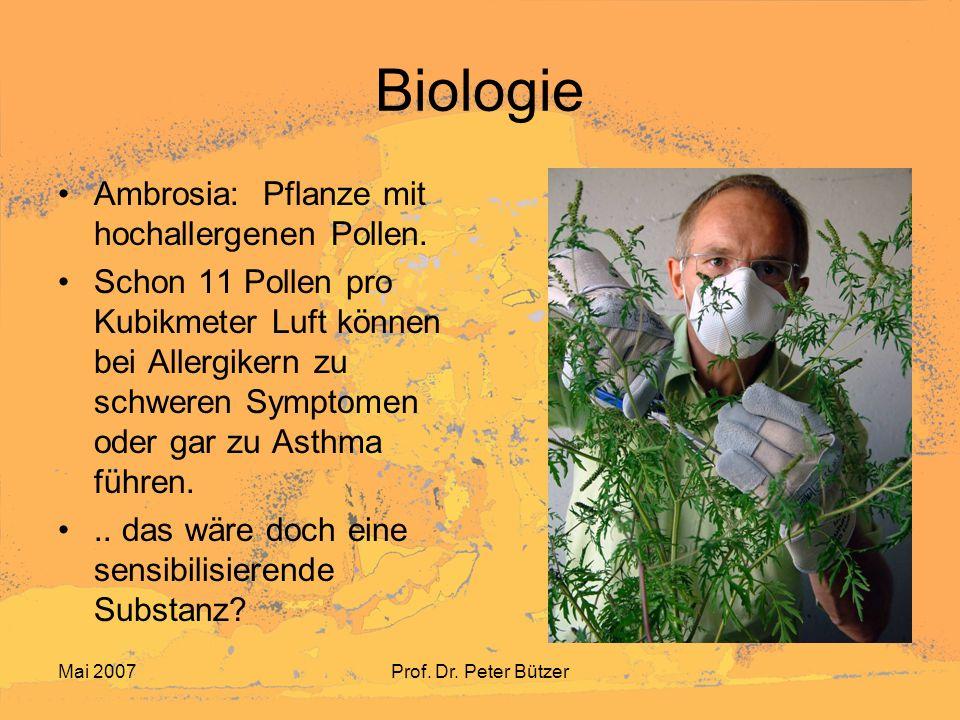 Biologie Ambrosia: Pflanze mit hochallergenen Pollen.