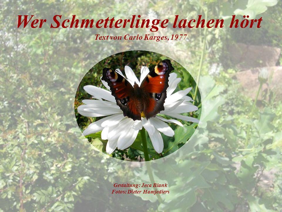 Wer Schmetterlinge lachen hört