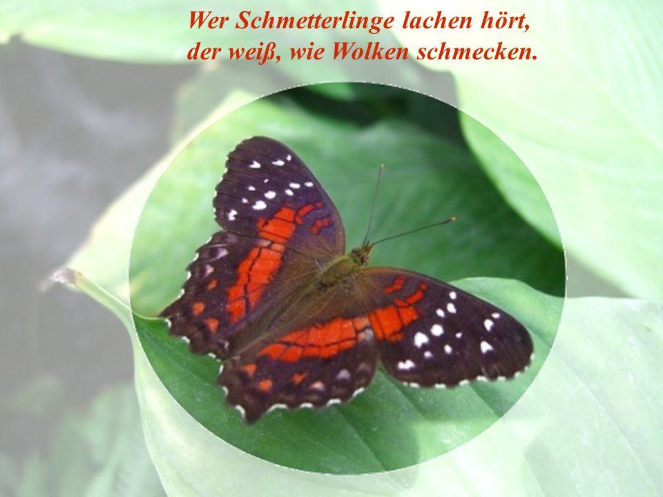Wer Schmetterlinge lachen hört,