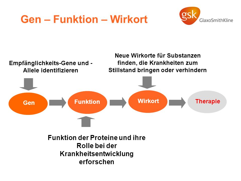 Gen – Funktion – Wirkort