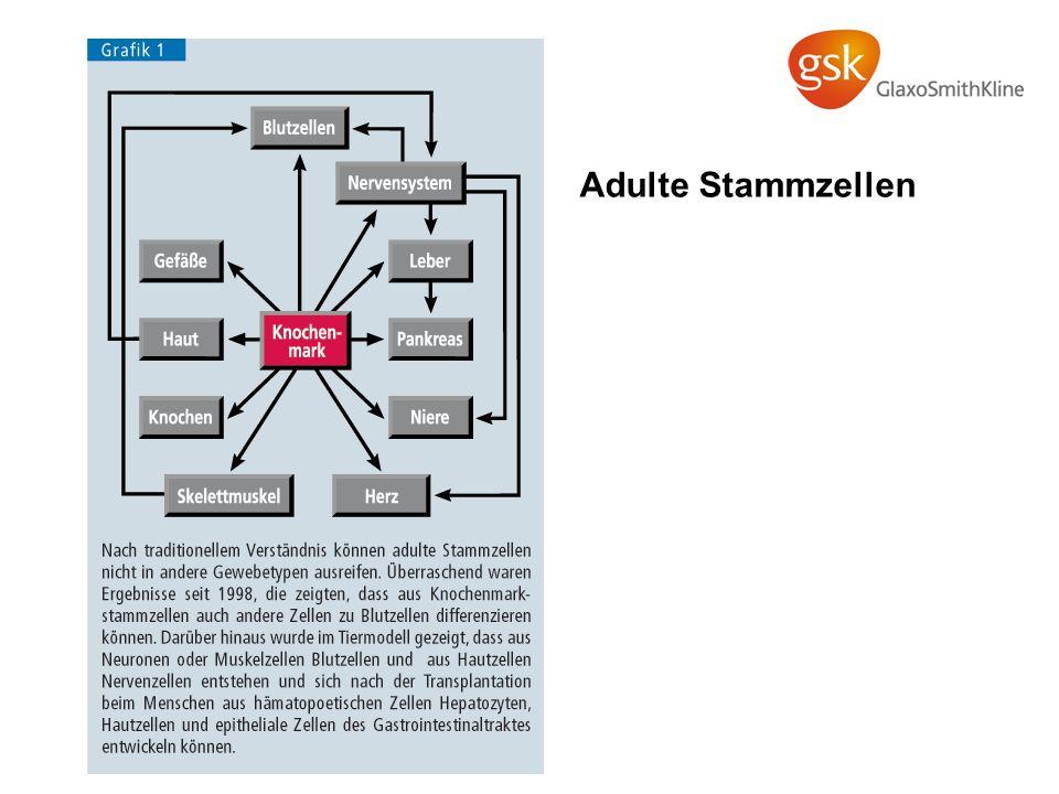 Adulte Stammzellen