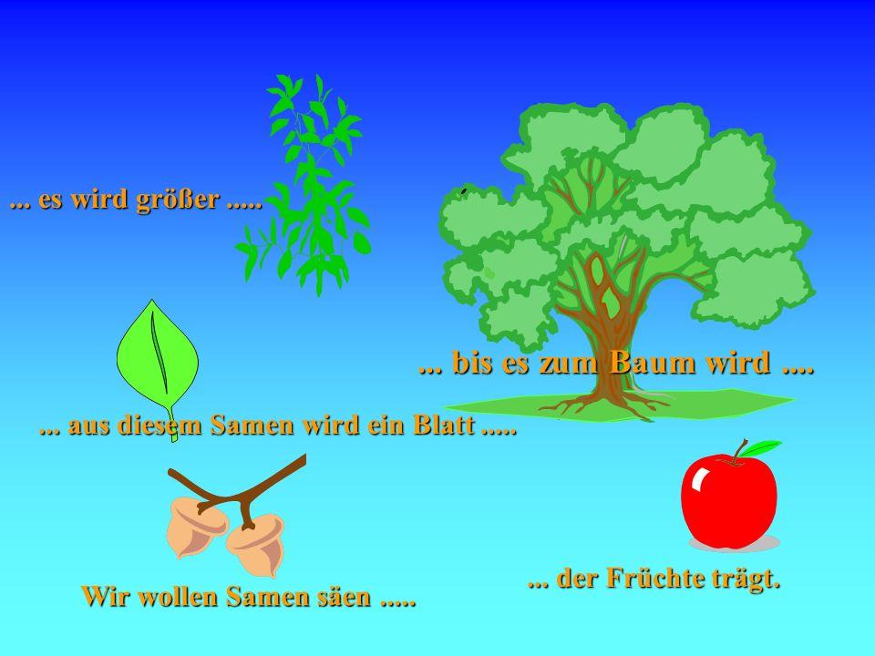 Samen ... bis es zum Baum wird .... ... es wird größer .....