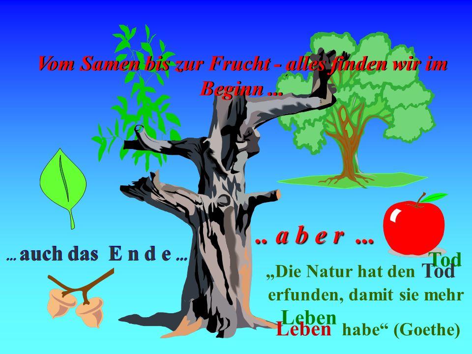 Tod Vom Samen bis zur Frucht - alles finden wir im Beginn ... .. a b e r ... ... auch das E n d e ...