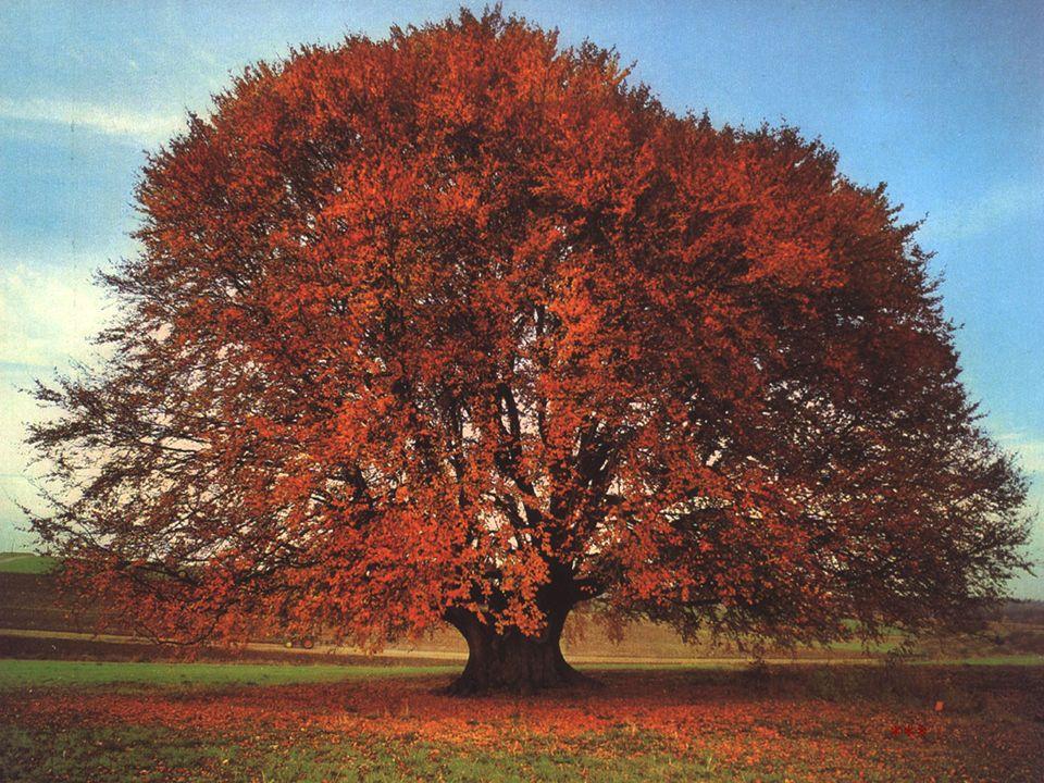 Herbst ***