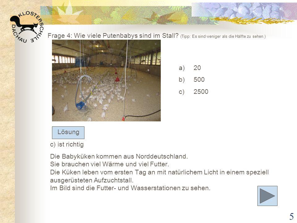 Frage 4: Wie viele Putenbabys sind im Stall