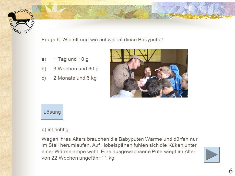 Frage 5: Wie alt und wie schwer ist diese Babypute