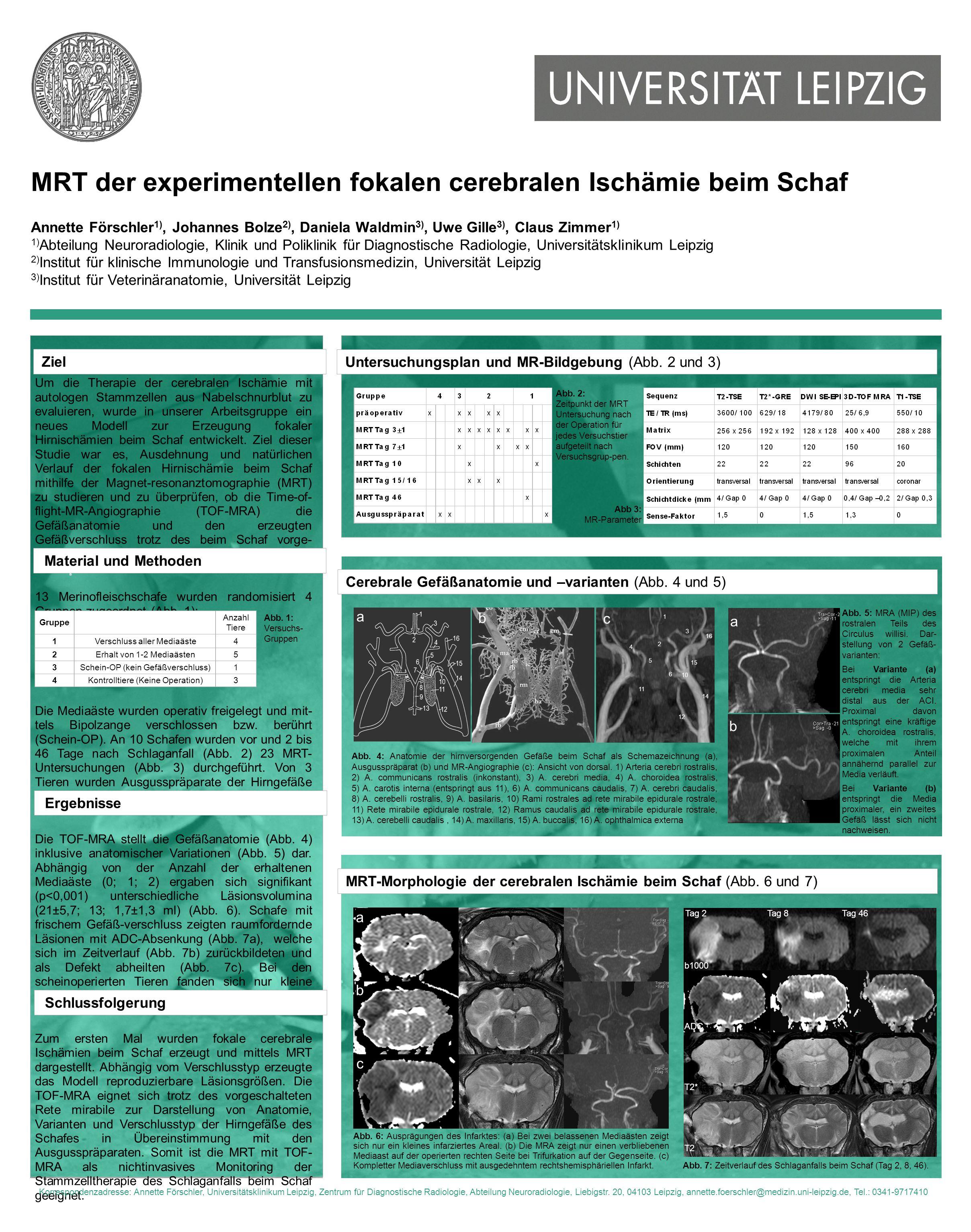MRT der experimentellen fokalen cerebralen Ischämie beim Schaf