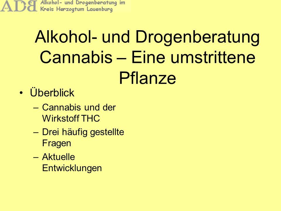 Alkohol- und Drogenberatung Cannabis – Eine umstrittene Pflanze