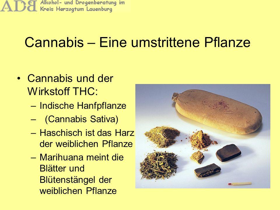 Cannabis – Eine umstrittene Pflanze