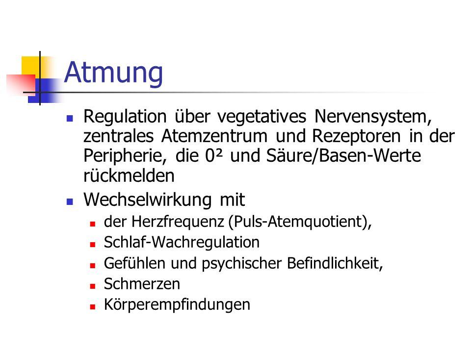 Atmung Regulation über vegetatives Nervensystem, zentrales Atemzentrum und Rezeptoren in der Peripherie, die 0² und Säure/Basen-Werte rückmelden.