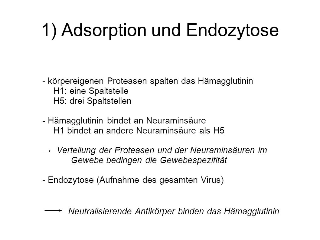 1) Adsorption und Endozytose