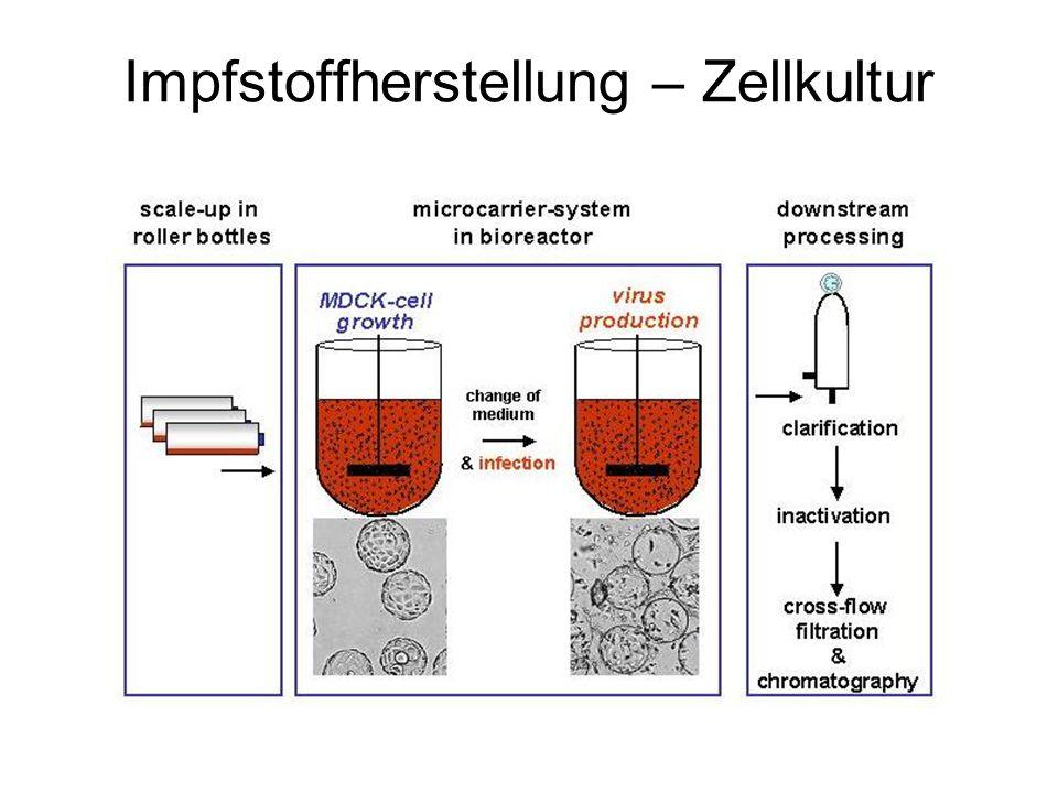 Impfstoffherstellung – Zellkultur