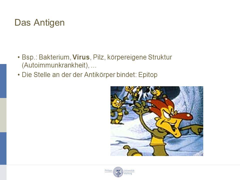 Das Antigen Bsp.: Bakterium, Virus, Pilz, körpereigene Struktur (Autoimmunkrankheit), ...
