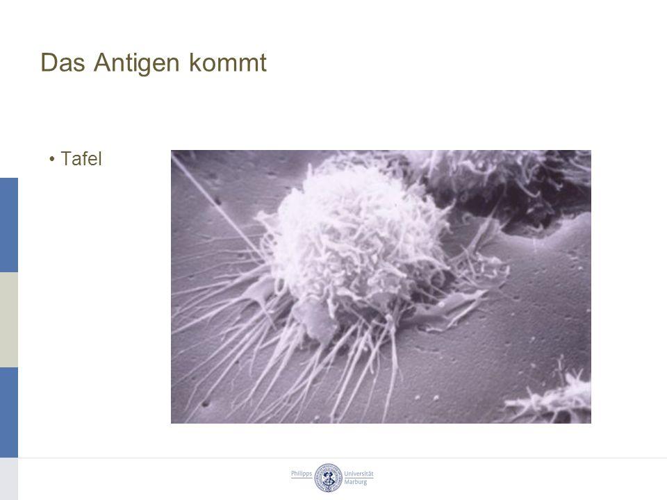 Das Antigen kommt Tafel