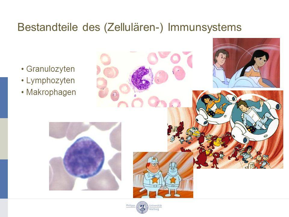 Bestandteile des (Zellulären-) Immunsystems