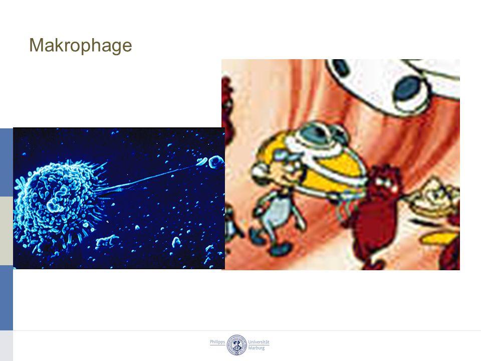Makrophage