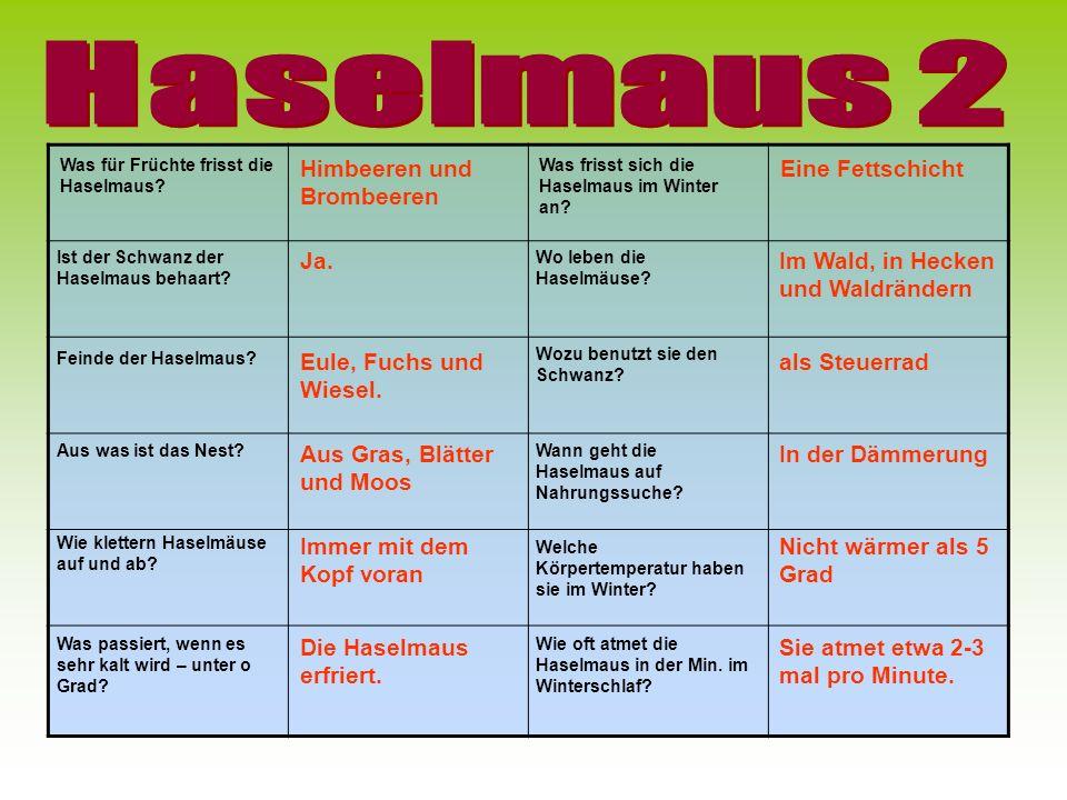 Haselmaus 2 Himbeeren und Brombeeren Eine Fettschicht Ja.